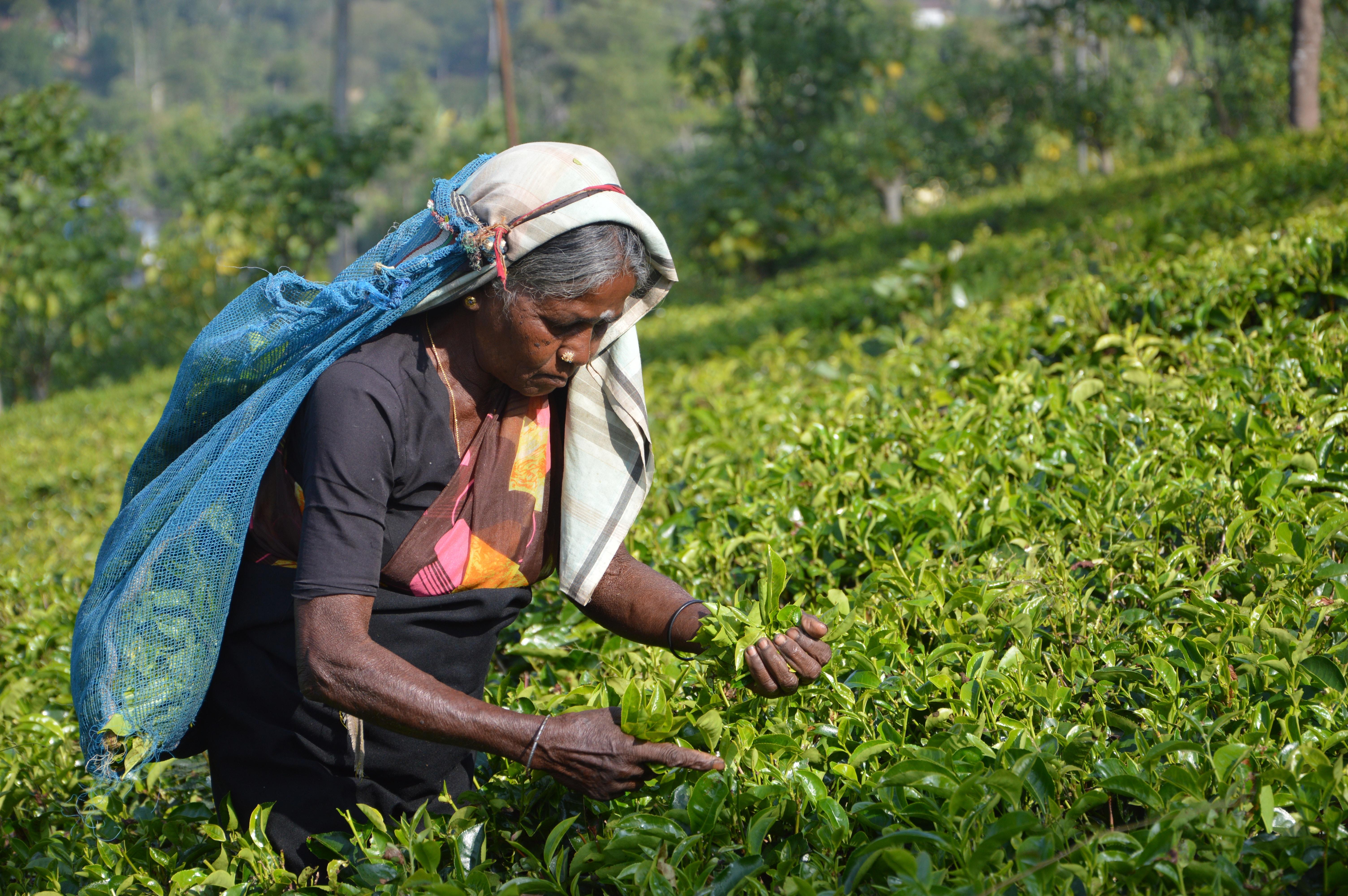 Žena pracující na poli