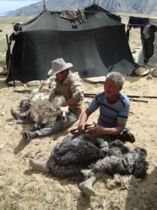 Tibetští_nomádi_stžíhající_ovce_Ladak_Indie_2011
