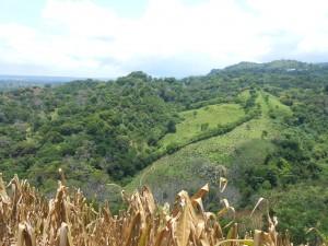 Typický pohled na tamnější krajinu. Hory, Kukuřičná pole, lesy i mítiny, na kterých se pase dobytek.